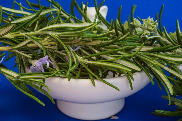 Jaké bylinky na hubnutí jsou nejlepší Na podporu jsou účinné čínské i několik léčivé